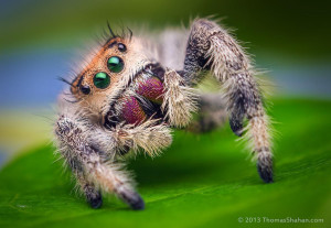 Yoga Spider