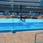 Manila Ocean Park, Sea Lion