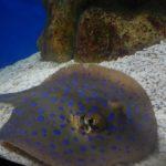 Oceanarium at Manila Ocean Park